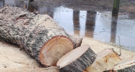 Rzeź drzew na Ulrychowie!