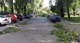 Drzewo przygniotło samochód na Tyszkiewicza
