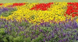 Ławki, remont wejść i kwiaty w Parku Sowińskiego