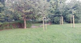 Mieszkańcy chcą posadzić drzewa na Kole