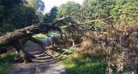 Połamane drzewa na skwerze Alojzego Pawełka