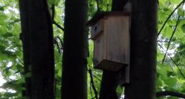 Chronimy jerzyki i wróble na Woli