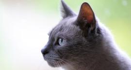 Koty rasowe zawitają na Wolę