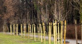 """Na Woli pojawiły się nowe drzewa i krzewy. Projekt """"Więcej tlenu!"""" zrealizowany."""