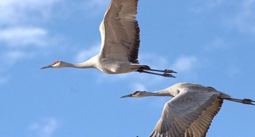 Ciekawostki, Spotkanie ornitologiem Skansenie Osadnictwa Nadwiślanskiego - zdjęcie, fotografia