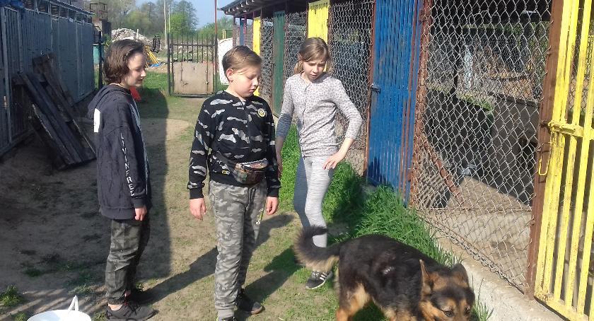 Oświata, Wizyta schronisku wolontariuszy Szkoły Podstawowej Rębowie - zdjęcie, fotografia