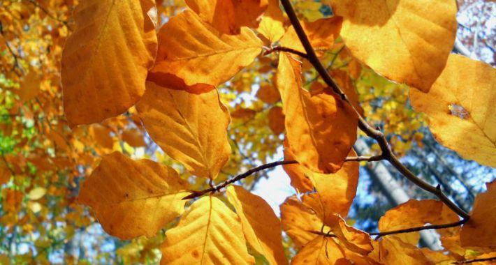 Koncerty, żółtych płomieniach liści - zdjęcie, fotografia
