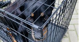 Skrajnie wychudzony i przerażony pies został odebrany właścicielowi