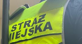 Kronika Straży Miejskiej 04 - 07.11.2019r.