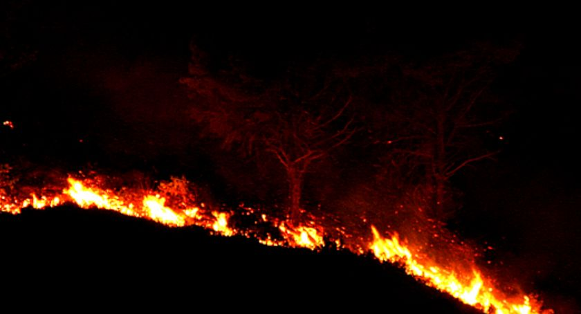 Pożary i wypadki, Pożar szkółce leśnej - zdjęcie, fotografia