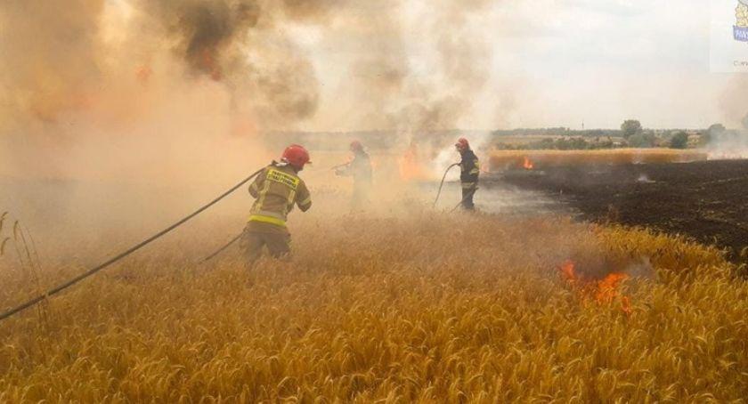 Pożary i wypadki, Poważny pożar zboża miejscowości Ludwików - zdjęcie, fotografia