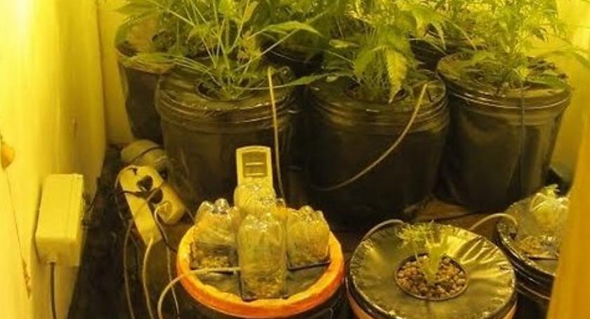Wiadomości, Skierniewiczanin produkował narkotyki mieszkaniu - zdjęcie, fotografia