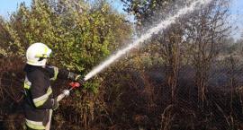 Pożar traw w okolicy ul. Starbacicha