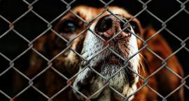 Nowe boksy dla psów ze schroniska