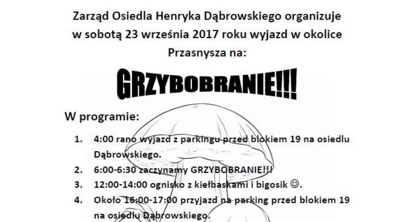 Zarządy osiedli, Zarząd osiedla Dąbrowskiego zaprasza grzybobranie - zdjęcie, fotografia