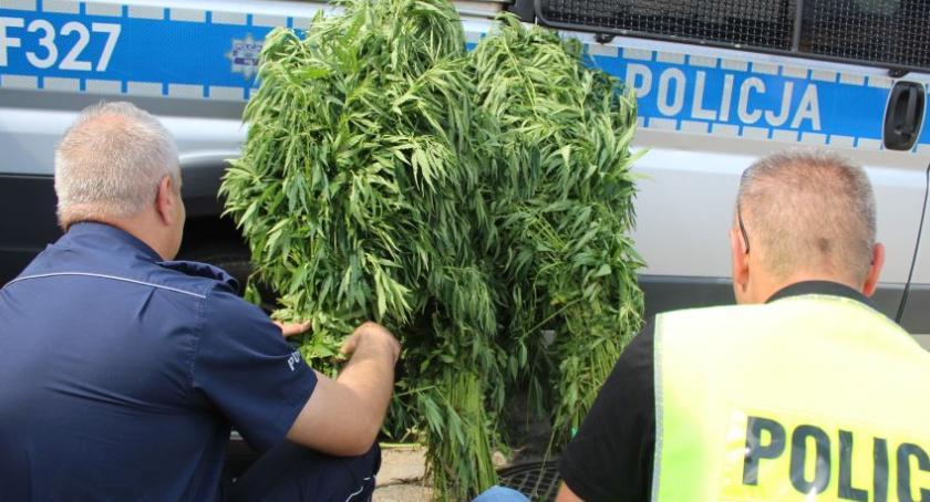 Kronika policyjna, Mundurowi zlikwidowali nielegalne uprawy konopi - zdjęcie, fotografia
