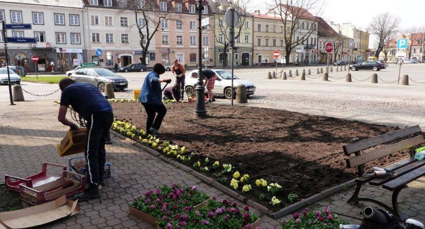Urząd Miejski, Ratusz rozstrzygnął przetarg utrzymanie miejskiej zieleni - zdjęcie, fotografia
