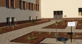 Ogródek dydaktyczny na terenie ZSP nr 2 już otwarty