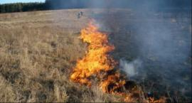 Pięć pożarów traw i trzcin w trakcie niedzielnego popołudnia