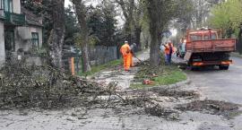 Podcinali suche gałęzie na ul. Armii Krajowej