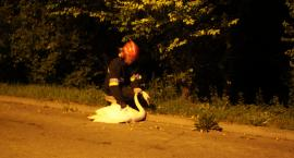 Nietypowa interwencja strażaków na Zatorzu