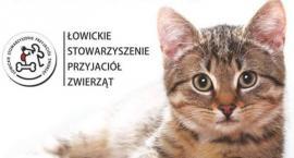 """""""Nie odwracaj kota ogonem"""". Akcja miłośników zwierząt z Łowicza"""