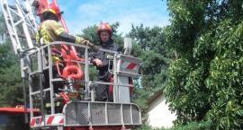 Łowicz: strażacy uwolnili uwięzionego w gnieździe bociana