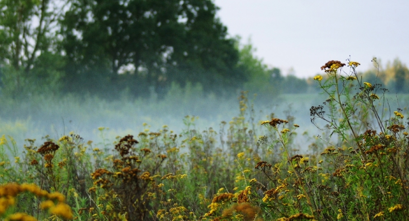Przyroda, Magiczny poranek - zdjęcie, fotografia