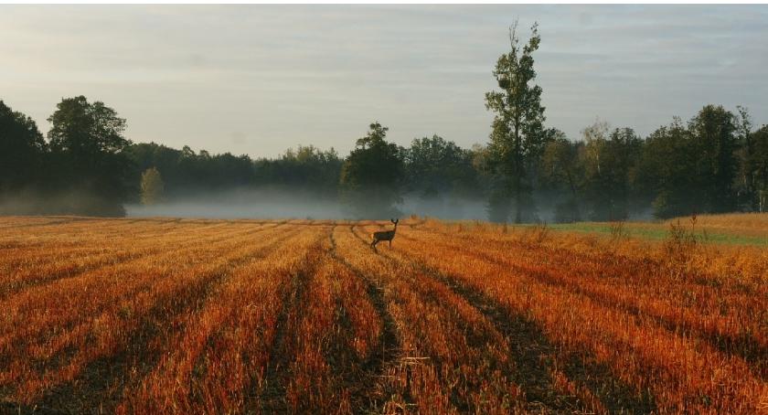 Przyroda, Puszczańskie pobudki - zdjęcie, fotografia