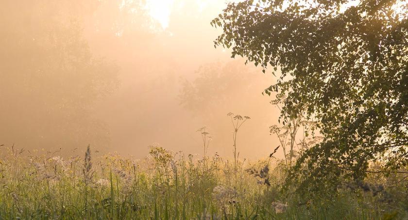 Kampinoski Park Narodowy, Zostań przewodnikiem Kampinoskim Parku Narodowym - zdjęcie, fotografia