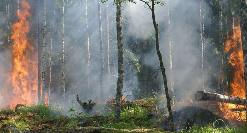 Pożary, straż pożarna, Rozległy pożar Kampinoskim Parku Narodowym - zdjęcie, fotografia