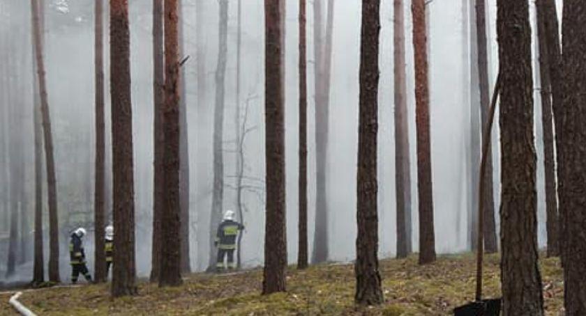 Pożary, straż pożarna, Pożar Kampinoskim Parku Narodowym - zdjęcie, fotografia