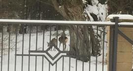 Kampinoski Park Narodowy zwierzęta: taki widok z okna w Józefowie