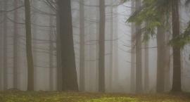 Bezpłatna wycieczka KPN: Czy w parku narodowym można wycinać drzewa?