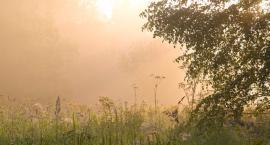 Zostań przewodnikiem po Kampinoskim Parku Narodowym