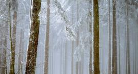 Powitanie zimy w Puszczy Kampinoskiej: wycieczka