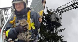 Kot, który przećwiczył strażaków dwa razy