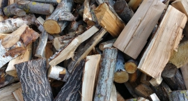 Kradli drewno z Kampinoskiego Parku Narodowego