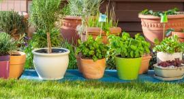 Pielęgnacja roślin i odpowiednie donice.