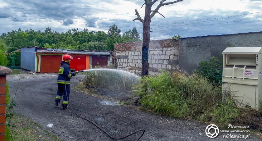 Na sygnale, Strażacy gasili pożar drzewa Glinianej - zdjęcie, fotografia