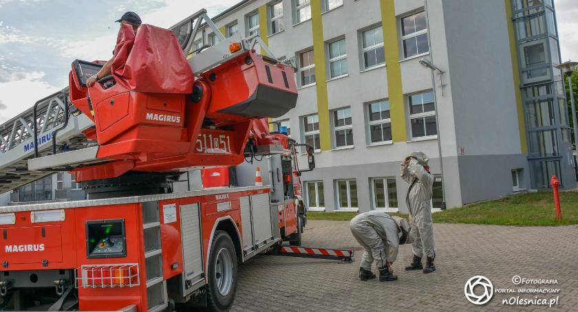Wydarzenia, Strażacy zneutralizowali gniazdo terenie - zdjęcie, fotografia