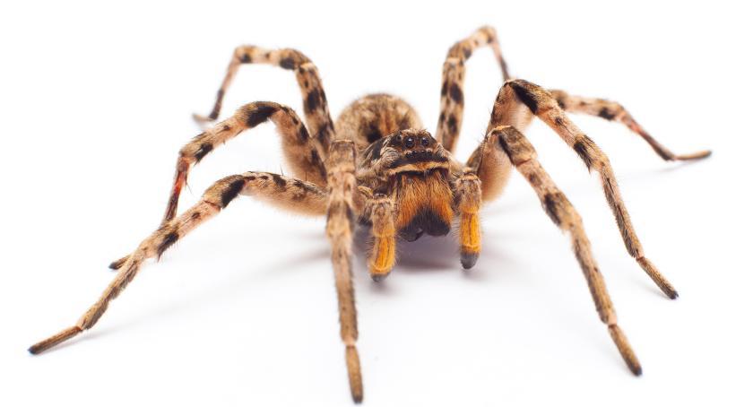 Wydarzenia, zaprasza wystawę pająków Zamku - zdjęcie, fotografia