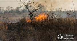 Kolejny pożar traw na kwadratach