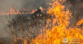 Wypalanie traw - grozi za to surowa kara