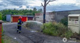 Strażacy gasili pożar drzewa na Glinianej