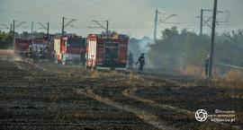 Straż podsumowała lipcowe pożary pól