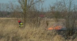 Kolejny w tym roku pożar traw - tradycyjnie na kwadratach