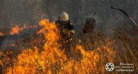 Stop wypalaniu traw - apel strażaków - rozmowa z rzecznikiem PSP - VIDEO