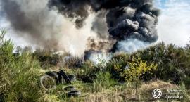 Pożar nieużytków i opon koło Cieśli - VIDEO