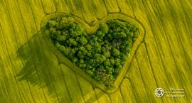 Zakątek Miłości - twór natury w polu rzepaku